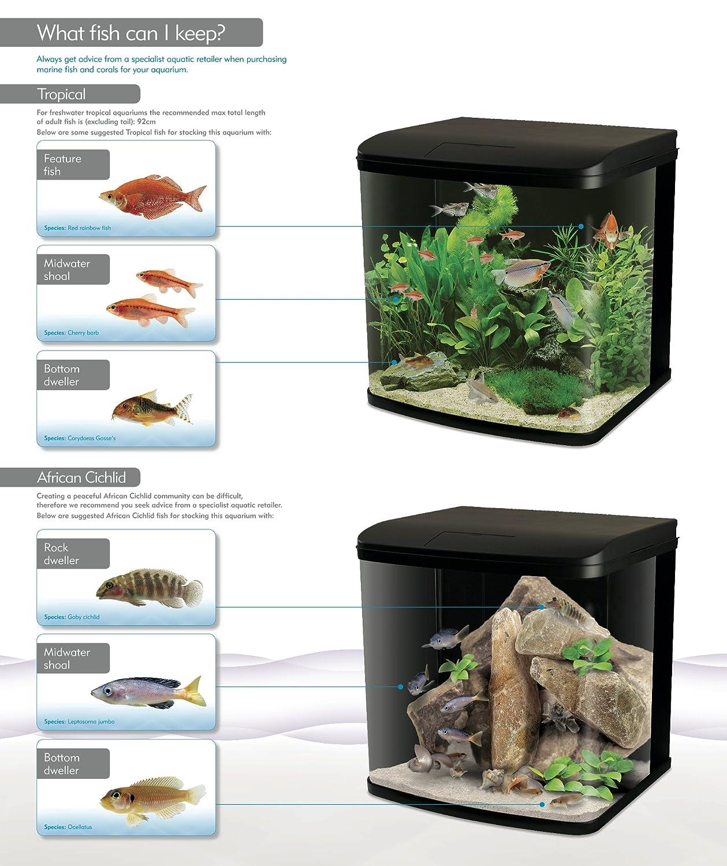 Freshwater aquarium fish for sale online uk - Interpet Led Lighting River Reef Glass Aquarium Fish Tank 94 Litre Amazon Co Uk Pet Supplies