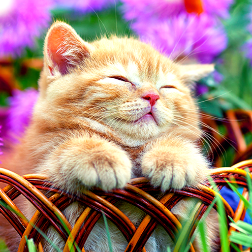 Unduh 500 Wallpaper Bergerak Kucing Lucu Hd Terbaik Wallpaper Keren