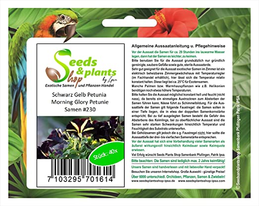 40 campanilla Petunia amarillo negro semillas de Petunia flores jardín #230: Amazon.es: Jardín