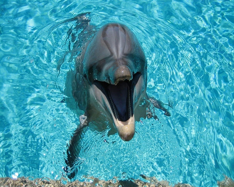Diy 5D Diamond Painting,Happy Dolphin Rhinestone Bordado Pinturas ...