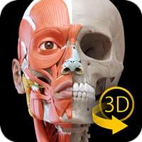 Sistema Muscular - Anatomia 3D