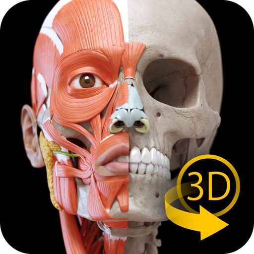 Sistema Muscular - 3D Anatomía: Amazon.es: Appstore para Android
