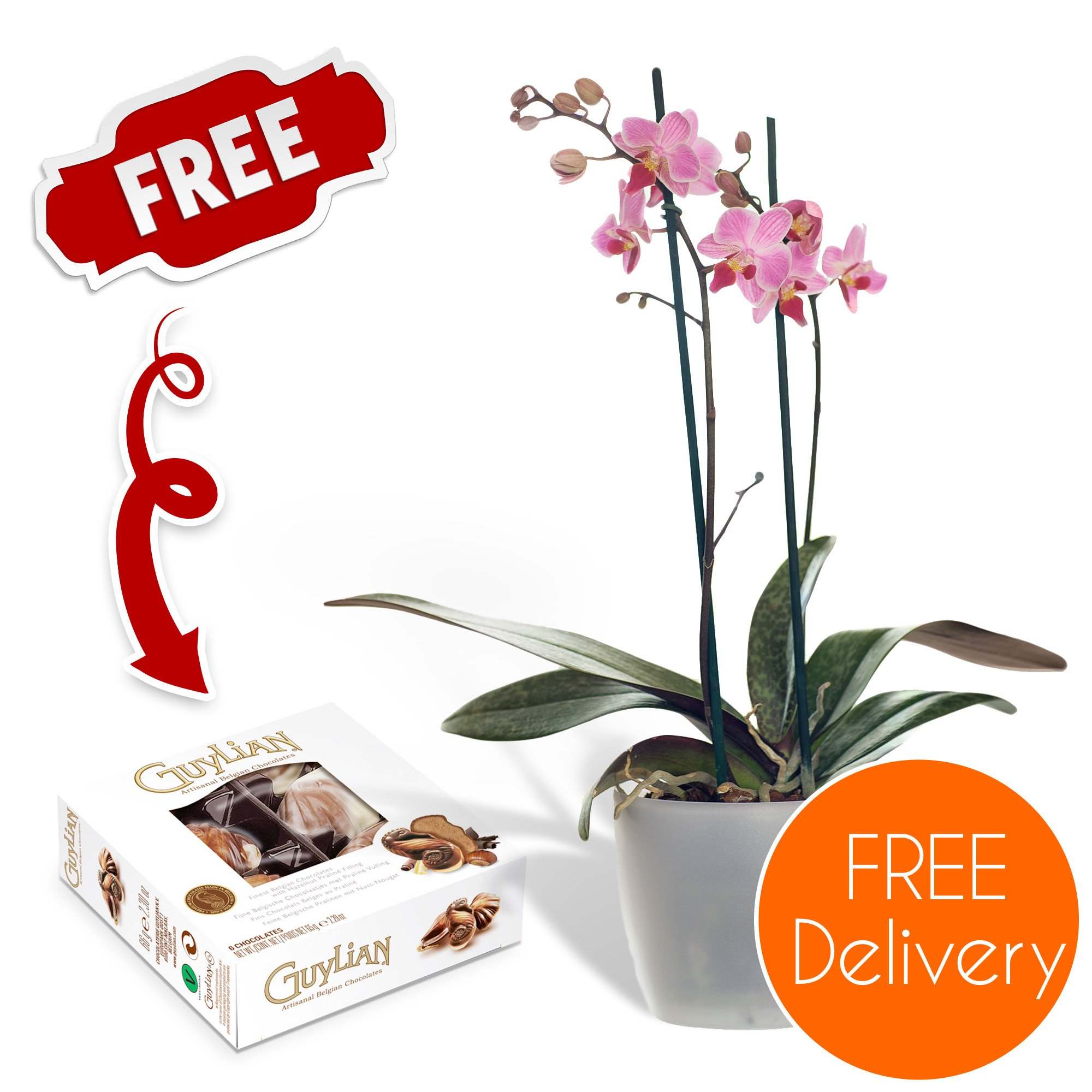 Pink Mothers Day Plants Amazon