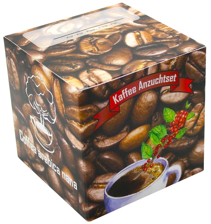 Geschenk-Anzuchtset Kaffee - Echter Cafe Arabica Nana - Kaffee Samen Anzuchtset - Geschenk Für Kaffeeliebhaber - Witziges Geburtstagsgeschenk limondo