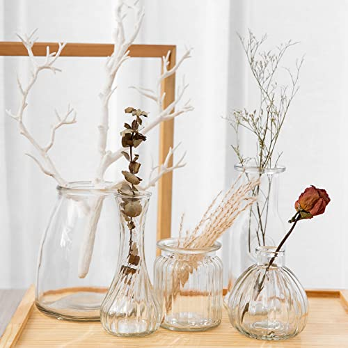 Anlin Set of 5 Rustic Small Glass Vase in Various Shapes Mini Vase Wedding Bridal Shower Centerpiece Table Vase