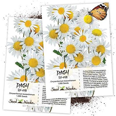 Seed Needs, Ox-Eye Daisy (Chrysanthemum leucanthemum) Twin Pack of 1, 000 Seeds Each : Flowering Plants : Garden & Outdoor