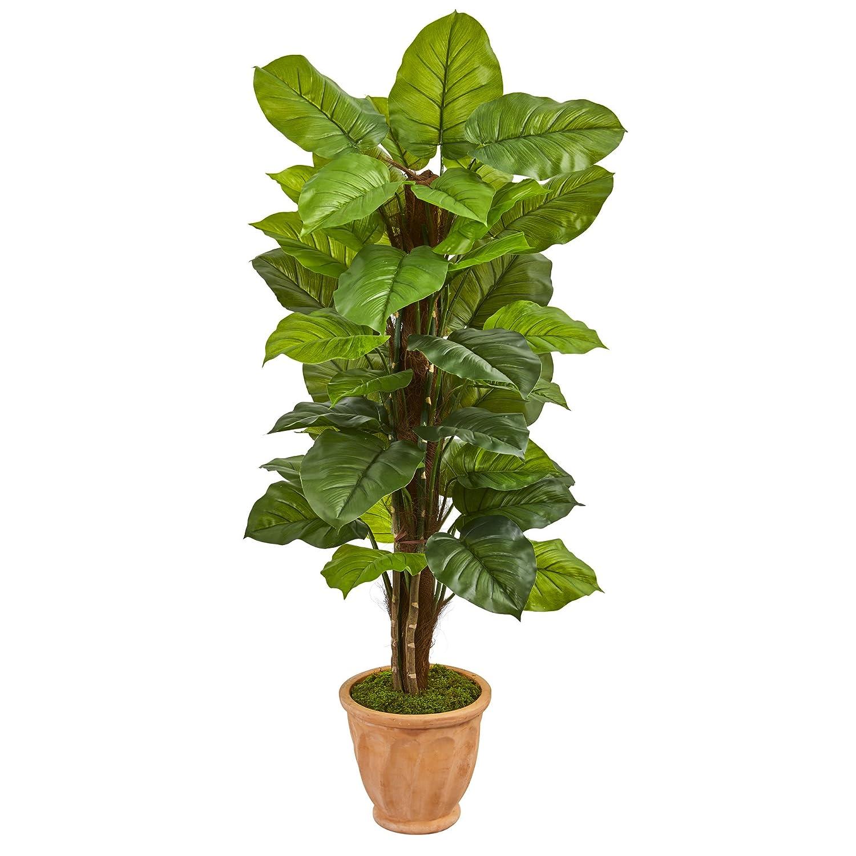 ほぼ天然の大きな葉っぱ テラコッタプランター 5フィート B078TZ9YTH