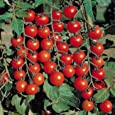 Go Green Tomato Cherry (2 Packets each 50 Seeds)