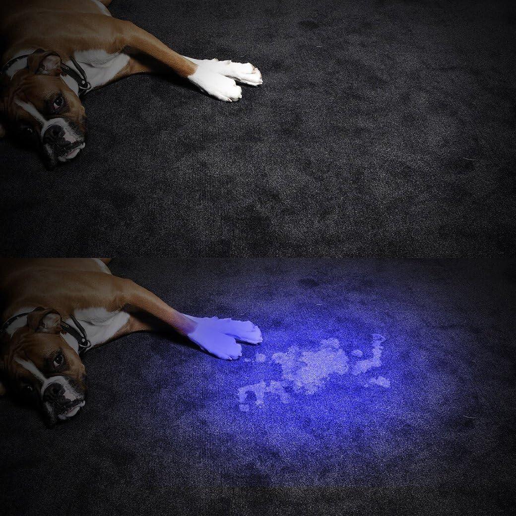morpilot UV Linterna 2 PCS 12 LED Linterna Ultravioleta UV para detectar orina Billete Falso Linterna Luz Ultravioleta Antorcha Detector de Billete Falso con Concha Negra