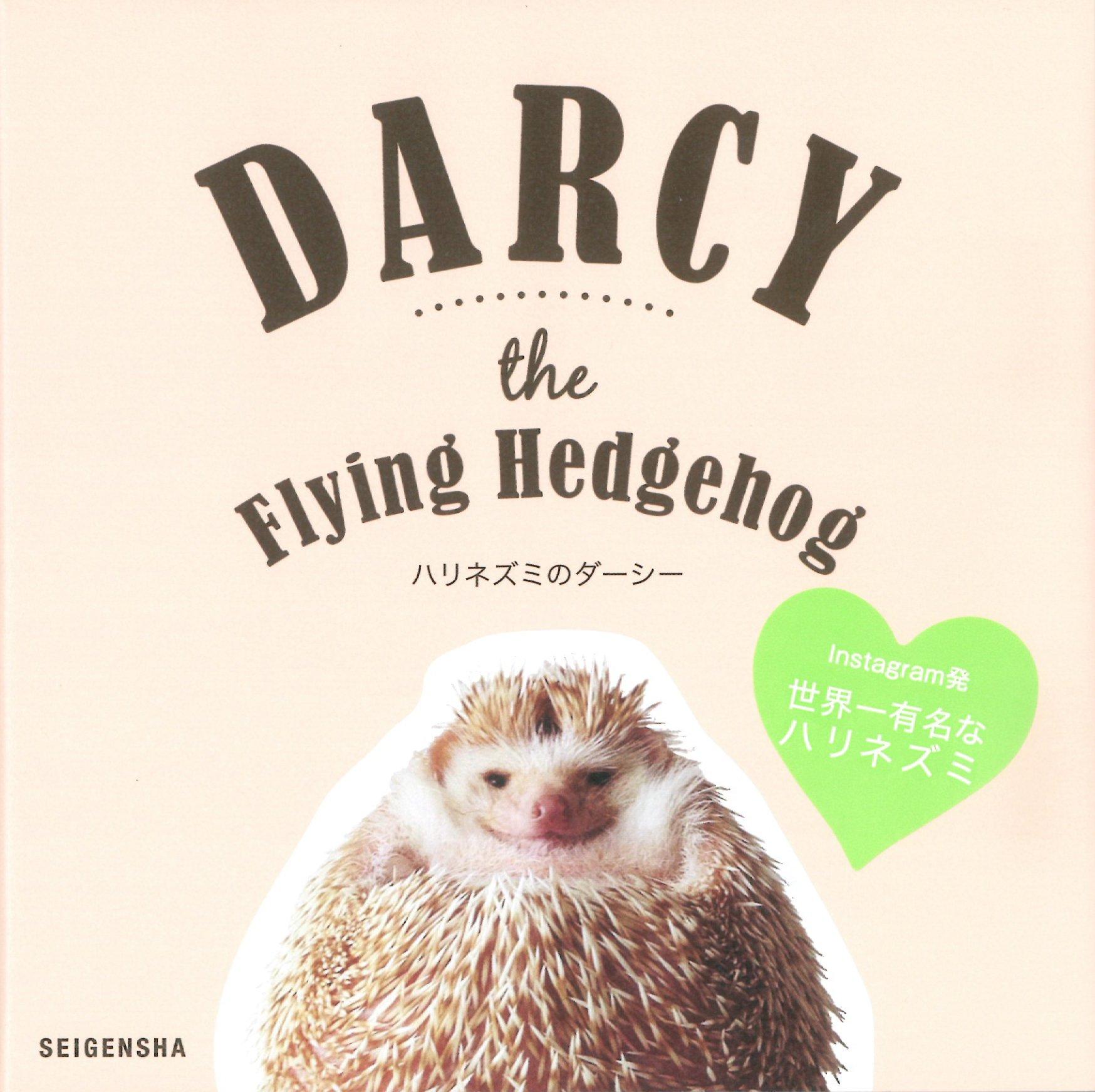 Amazoncom Darcy The Flying Hedgehog English And Japanese - Darcy cutest hedgehog ever