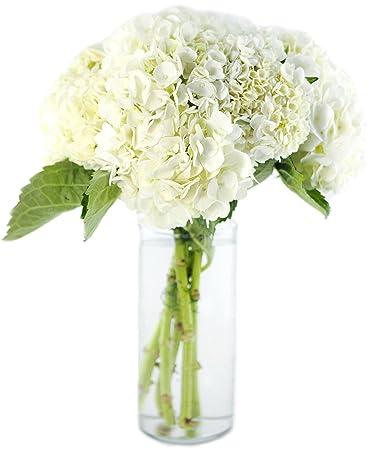 Amazon Bouquet Of Fresh White Hydrangeas Without Vase