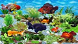 Fancy Goldfish Aquarium [Download]