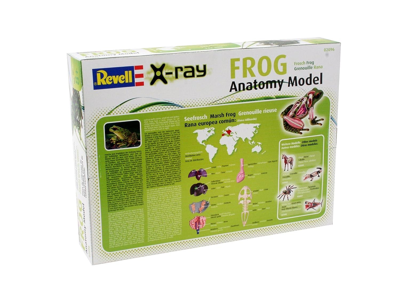 Revell X-Ray 02096 - Frosch: Amazon.de: Spielzeug