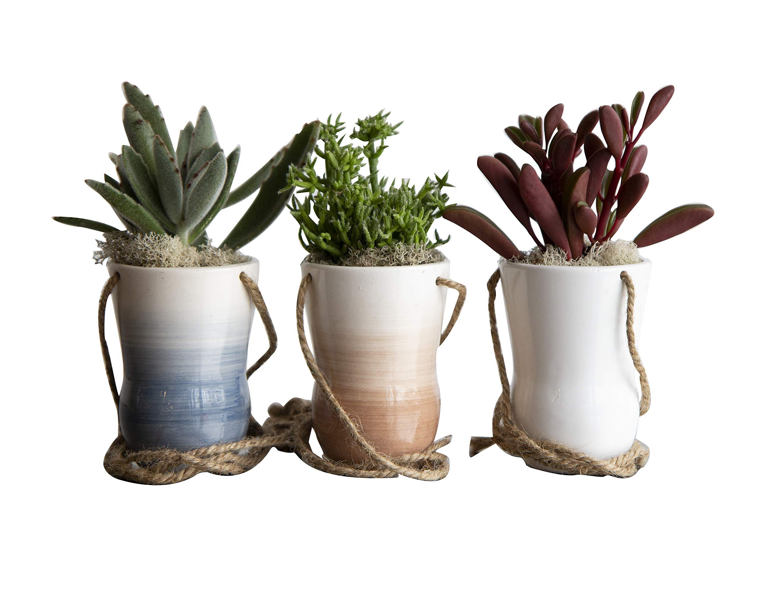Hallmark Flowers 3 Piece Succulents In 4-Inch Ceramic Hanging Containers