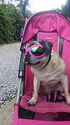 Amazon.com : QUMY Dog Goggles Eye Wear Protection