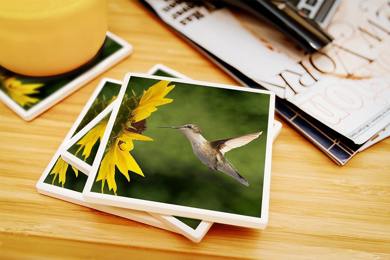 Amazon.com: Lantern Press Hummingbird (10x15 Wood Wall Sign, Wall ...