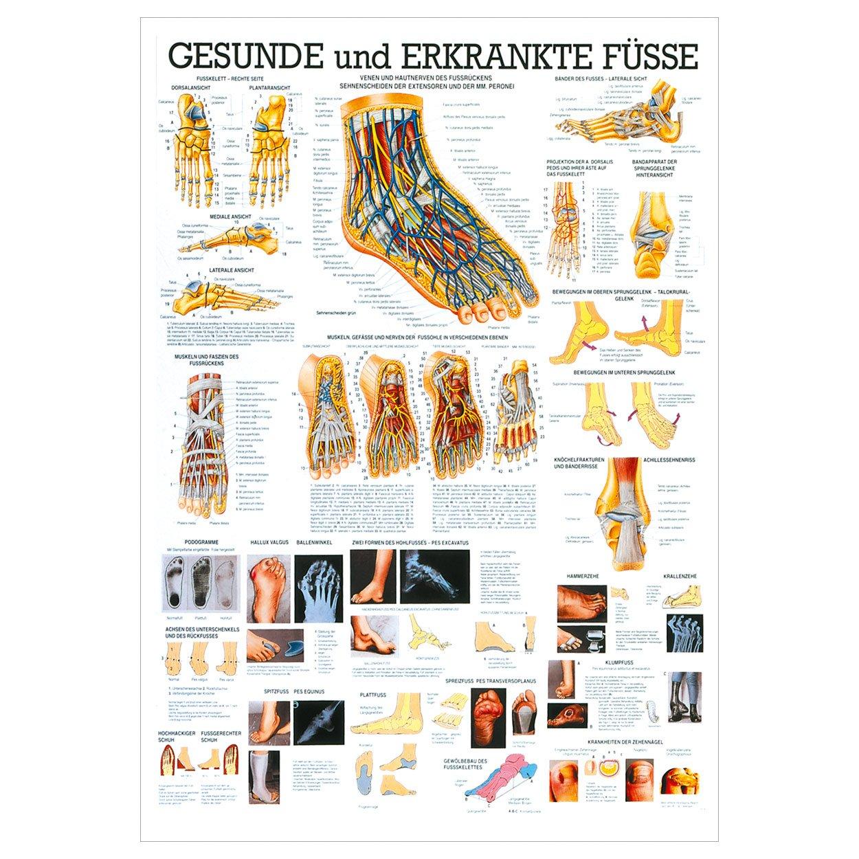 Schön Gelenke Des Fußes Anatomie Bilder - Menschliche Anatomie ...