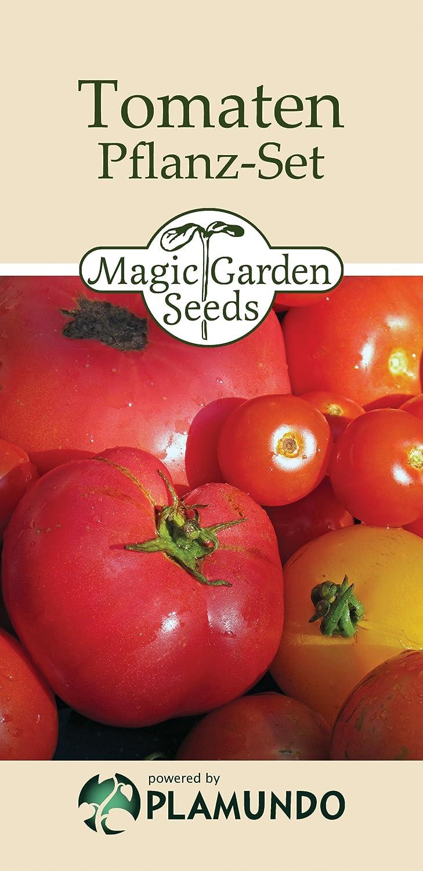 Basis-Aussaat-Set: 'Bio-Tomaten', 3 alte Tomatensorten: Berner Rose, Zuckertraube & Ananas mit Minigewächshaus, allem weiteren Anzuchtzubehör und Dünger