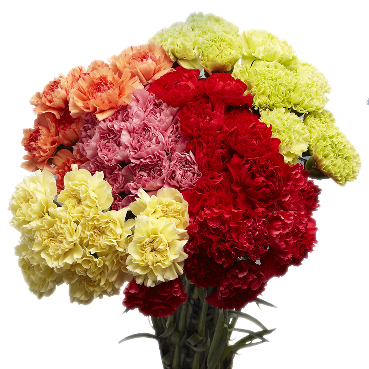 GlobalRose 200 Assorted Color Carnations - Fresh Flower Delivery- Beautiful Natural Blooms