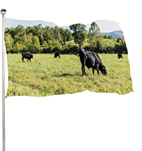 Dxichy Black Cows grazing on Pasture in ia Farms Countryside Meadow Field with Green Grass,Decoration Indoor and Outdoor BannerThe Banquet Large 3x5 Ft