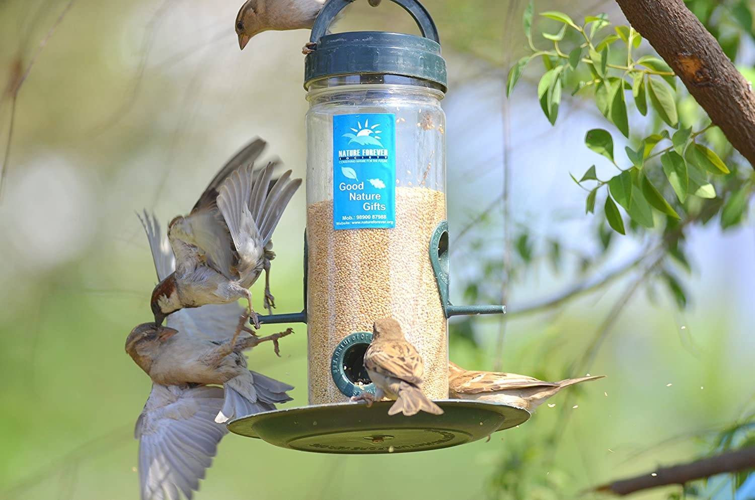 bird top a reviewed birds comparative compared feeder in best reviews analysis feeders for food