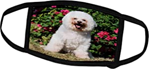 3dRose Danita Delimont - Dogs - A Bishon Frise Dog - US05 ZMU0031 - Zandria Muench Beraldo - Face Masks (fm_88761_1)