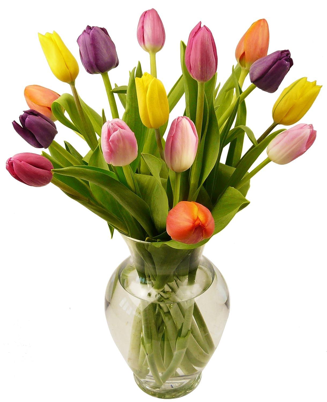 Amazon benchmark bouquets multi colored tulips with vase amazon benchmark bouquets multi colored tulips with vase grocery gourmet food floridaeventfo Gallery