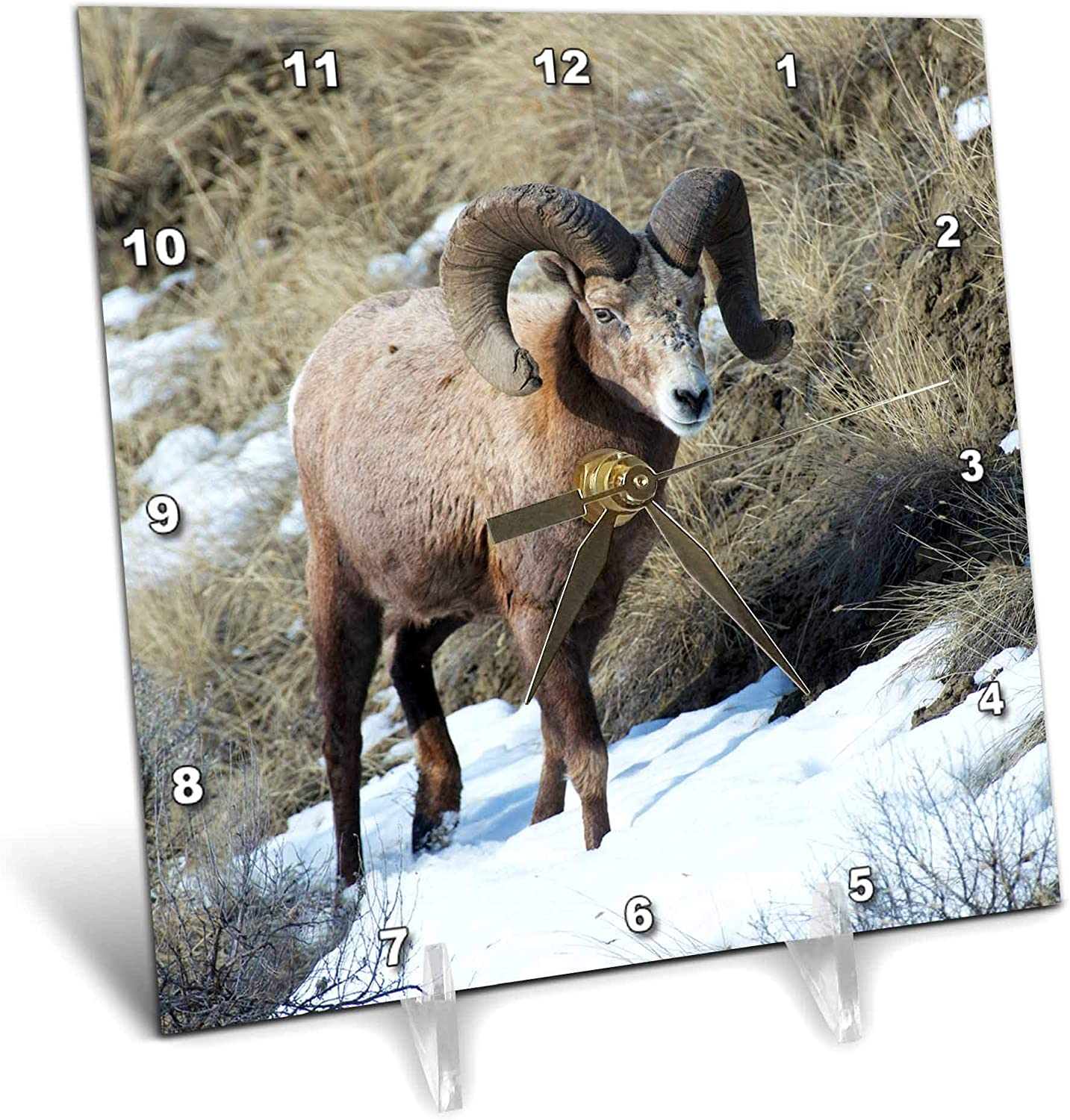 3dRose Danita Delimont - Animals - Rocky Mountain Bighorn Sheep ram. - Desk Clocks (dc_329705_1)