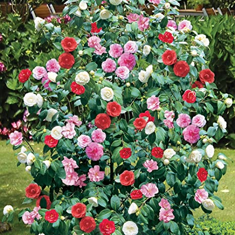 Resultado de imagen de flores rugiendo