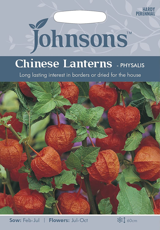Johnsons UK//JO//FL Chinese Lanterns Physalis