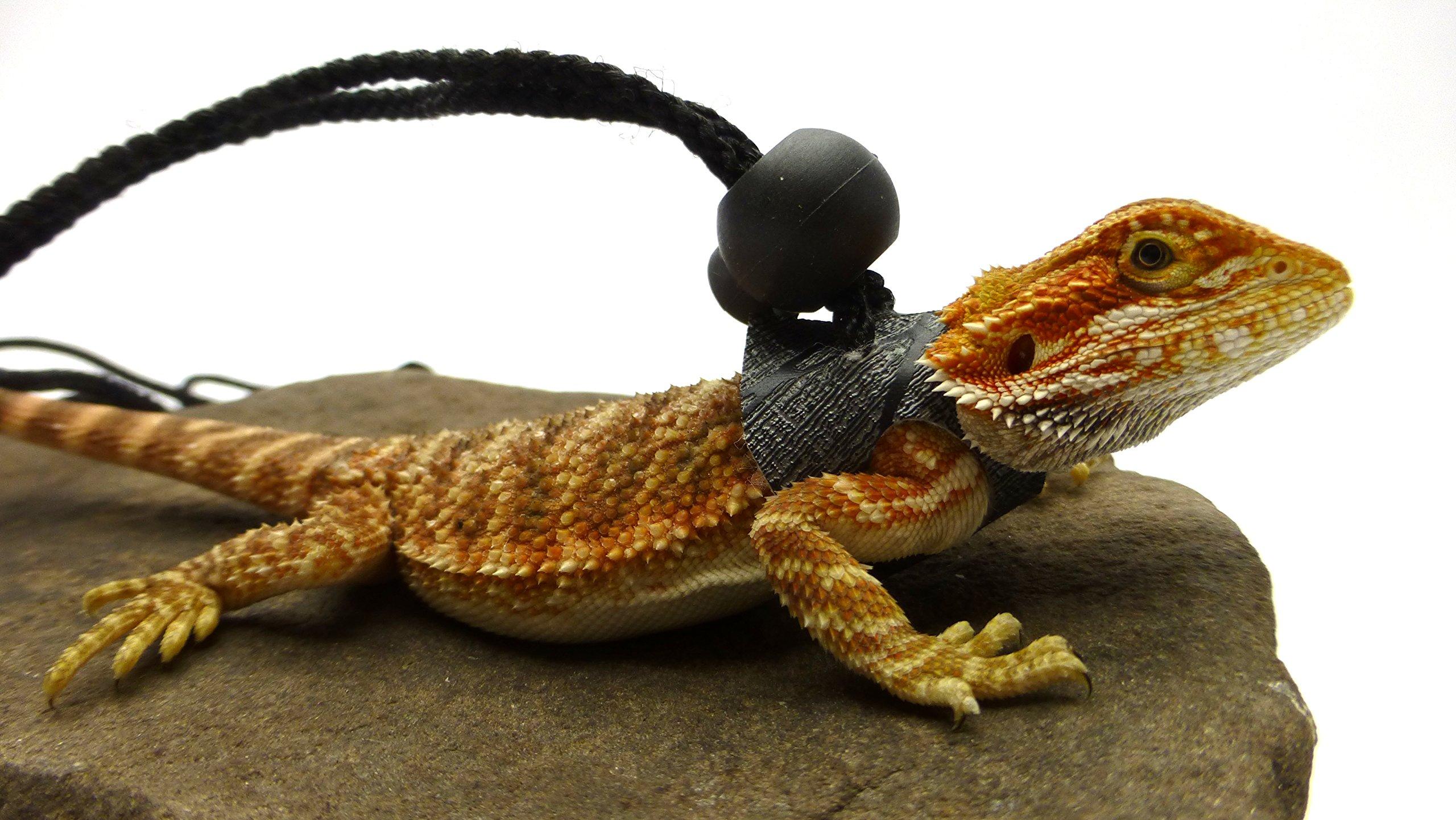Ogle Lizard Leash, Limited Edition Black Web (small size)