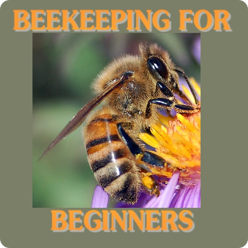 Used, Beekeeping For Beginners for sale  Delivered anywhere in USA