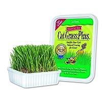 Deals on Cat-About by MiracleCorp Gimborn Single Cat Grass Plus, 60-Gram