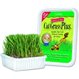 Cat-A'bout Multi-Cat CatGrass Plus Tub 150 Grams by MiracleCorp/Gimborn