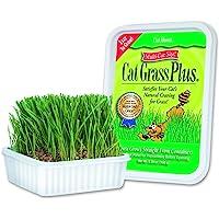 Cat-About by MiracleCorp Gimborn Single Cat Grass Plus, 60-Gram