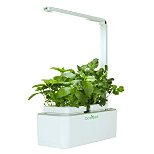 Odyseed Eden - Cultivez vos herbes aromatiques