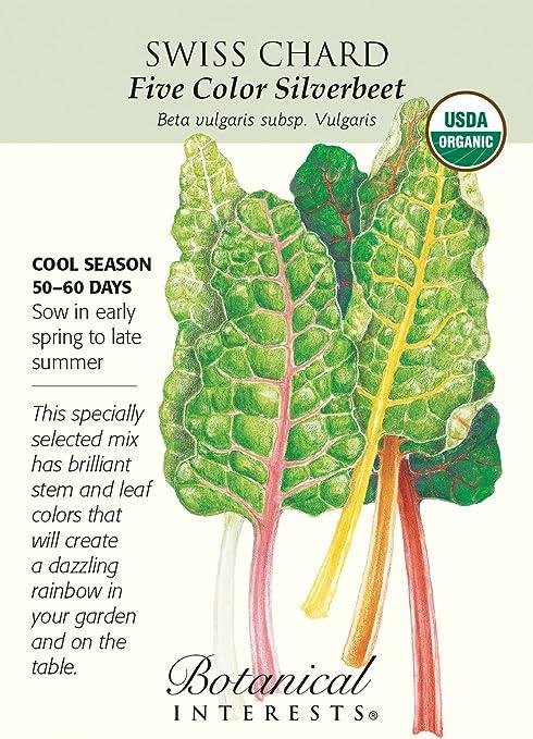 "Beta vulgaris ;Great flavour;colourful stems 20 SILVERBEET /""RAINBOW CHARD/"" SEEDS"