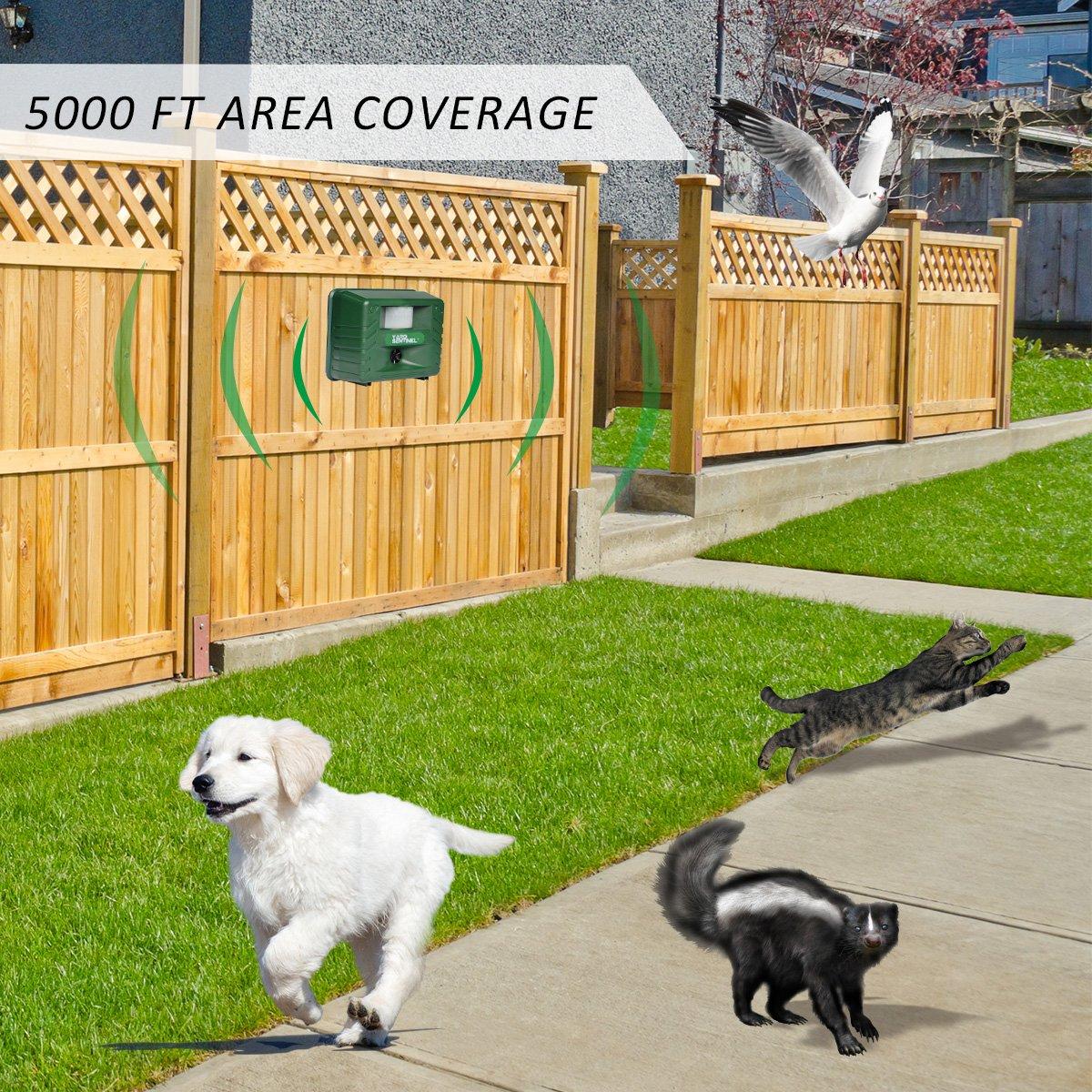 ASPECTEK Ultrasonidos Ahuyentador de Animales y Plagas, Ahuyentador de Gatos Y Perros con Parpadeo de la Luz LED (Sin Control Remoto): Amazon.es: Hogar