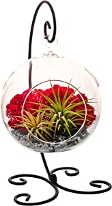 Air Plant Terrarium Kit with Black and Silver Rocks, Red Moss & Black Metal Stand/5