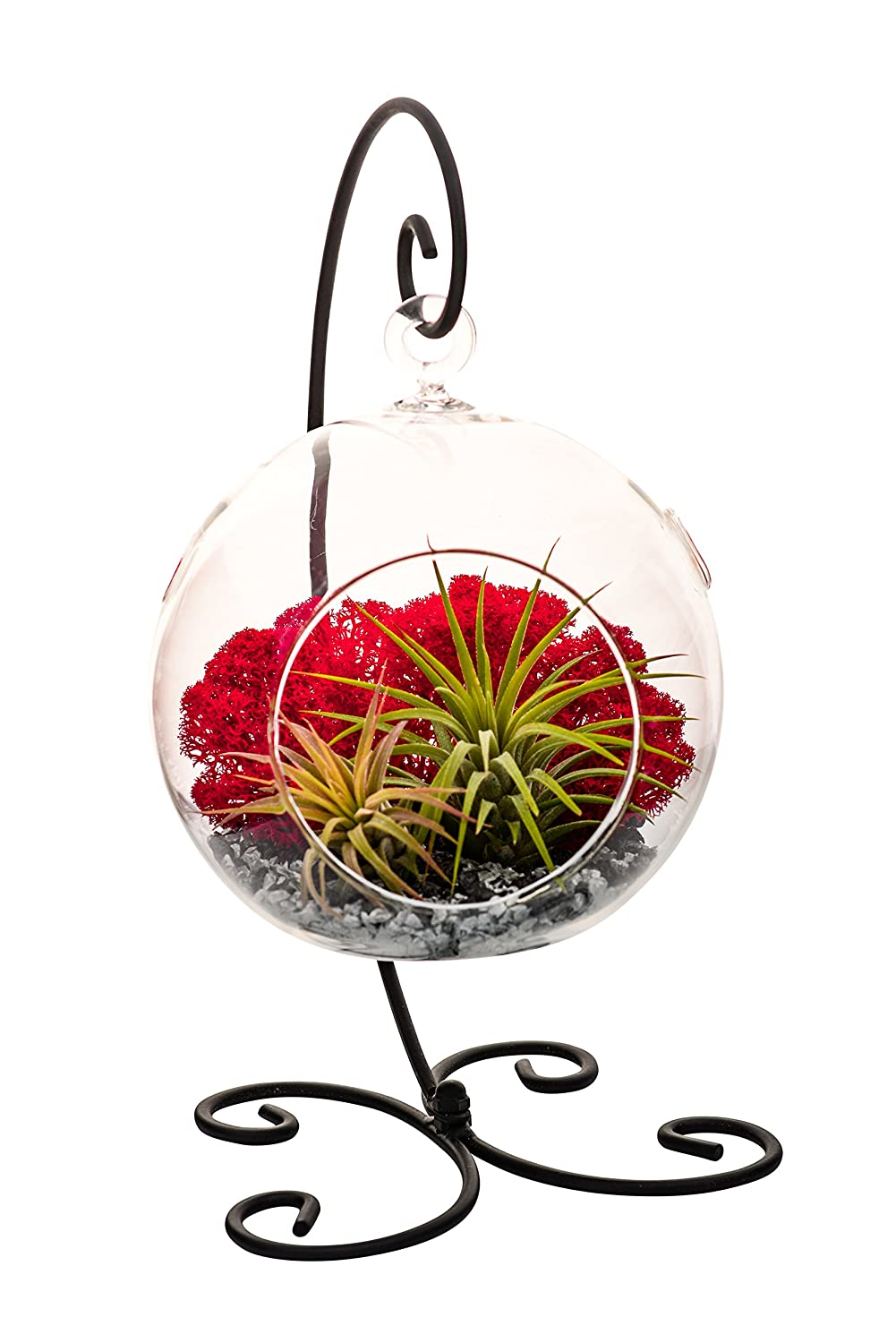 Air Plant Terrarium Kit with Black and Silver Rocks, Red Moss Black Metal Stand 5 Round Glass