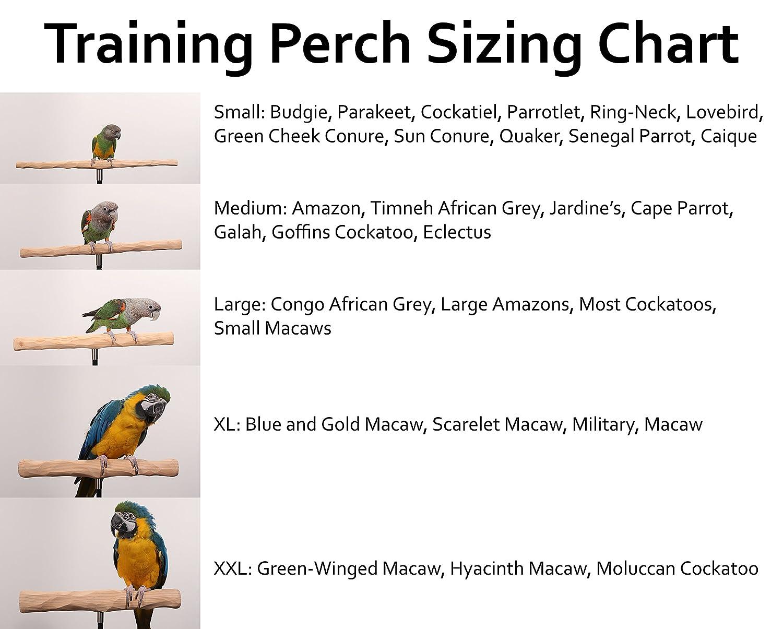 Amazon.com: Parrot percha de ropa Soporte de entrenamiento ...