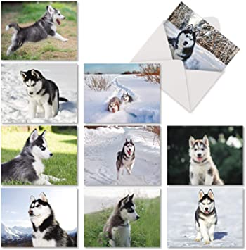 Envelopes 4Pack Puppy Dog Siberian Husky Dogs Puppies Greeting Notecards