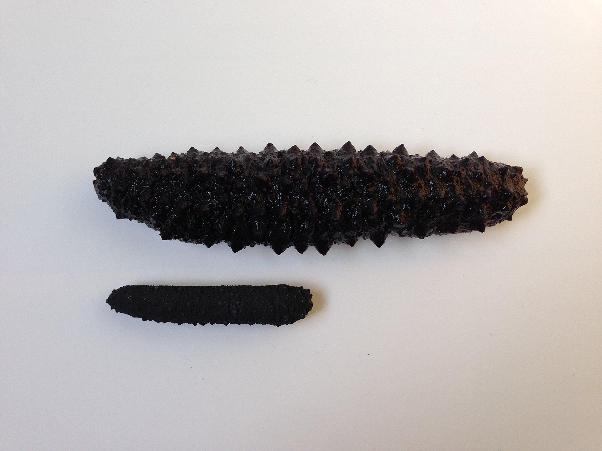 海参天下 Wild Black pin Atlantic Dried Sea cucumber 8oz pack (60-90pcs #5)大西洋岩刺参 8oz(60-90头,5号) by Sea Cucumber Inc (Image #4)