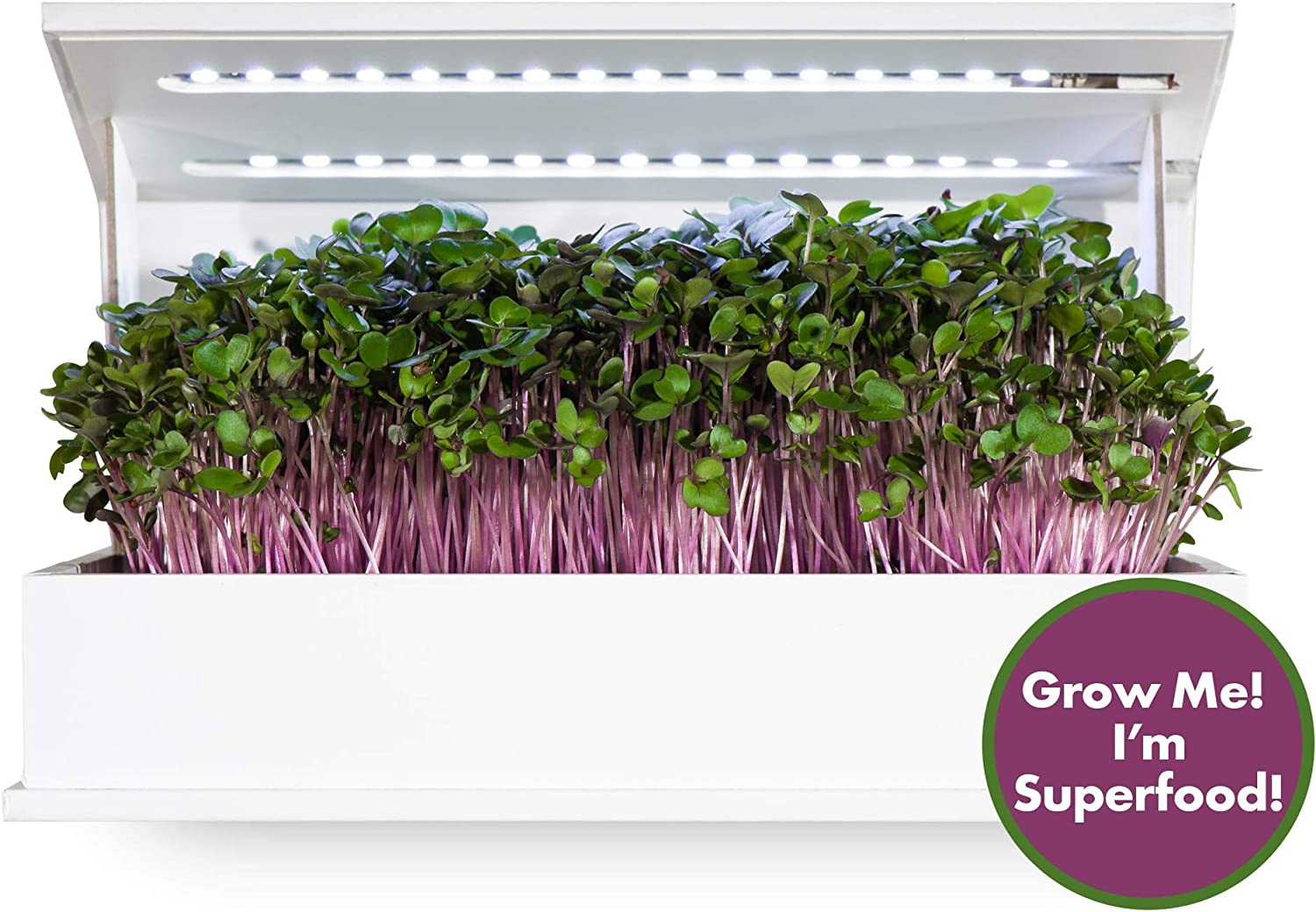 Grow Book Countertop Microgreens Garden - Cruciferous Edition - Indoor Gardening Solution - Includes Seeds, Soil & LED Lights - Grows in About 10 Days - Organic & Non-GMO