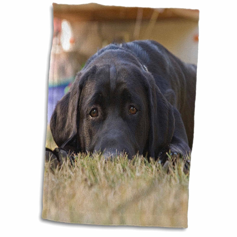 15 x 22 Na02 Rbr0015 3D Rose Labrador Retriever Puppy Dog Brown Hand//Sports Towel Rick A