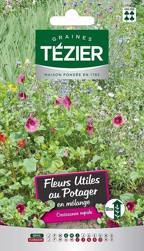bolsa de semillas Mezcla de flores útiles en el huerto - Tezier ...