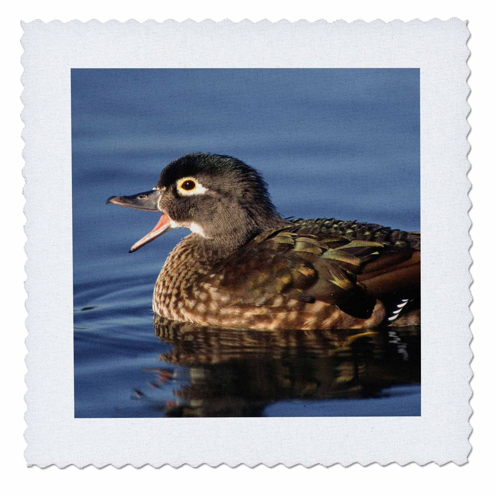 3dRose Danita Delimont - Ducks - Wood duck, female, Aix sponsa, calling, western Oregon, USA - 22x22 inch quilt square (qs_259888_9)