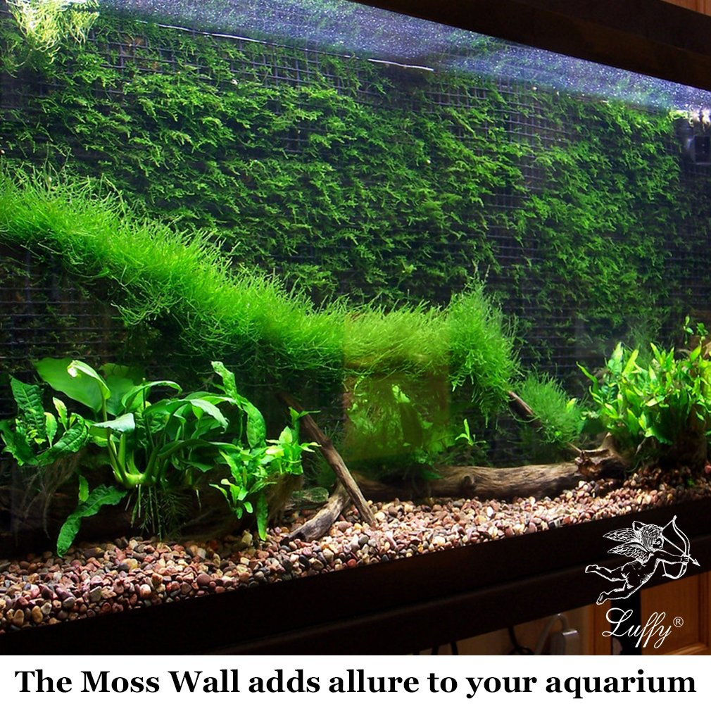 Fish tank real plants - Amazon Com Decorative Luffy Aquatic Moss Wall Floor Mesh Kit Create A Lush Living Plant Moss Wall Or Moss Carpet For Your Fish Tank Plant Not