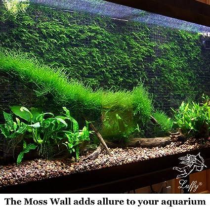 Amazon Com Luffy Decorative Aquatic Moss Wall Floor Mesh Kit