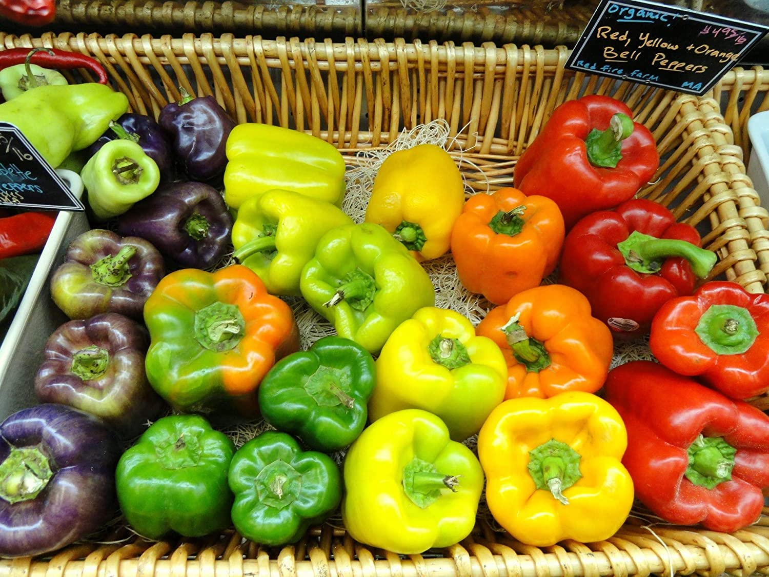 Zellajake Farm and Garden Rainbow Bell Pepper Mix Buy Many Sizes to 1/4 LB Colors Heirloom #37 (120 Seeds, or 1 Gram)